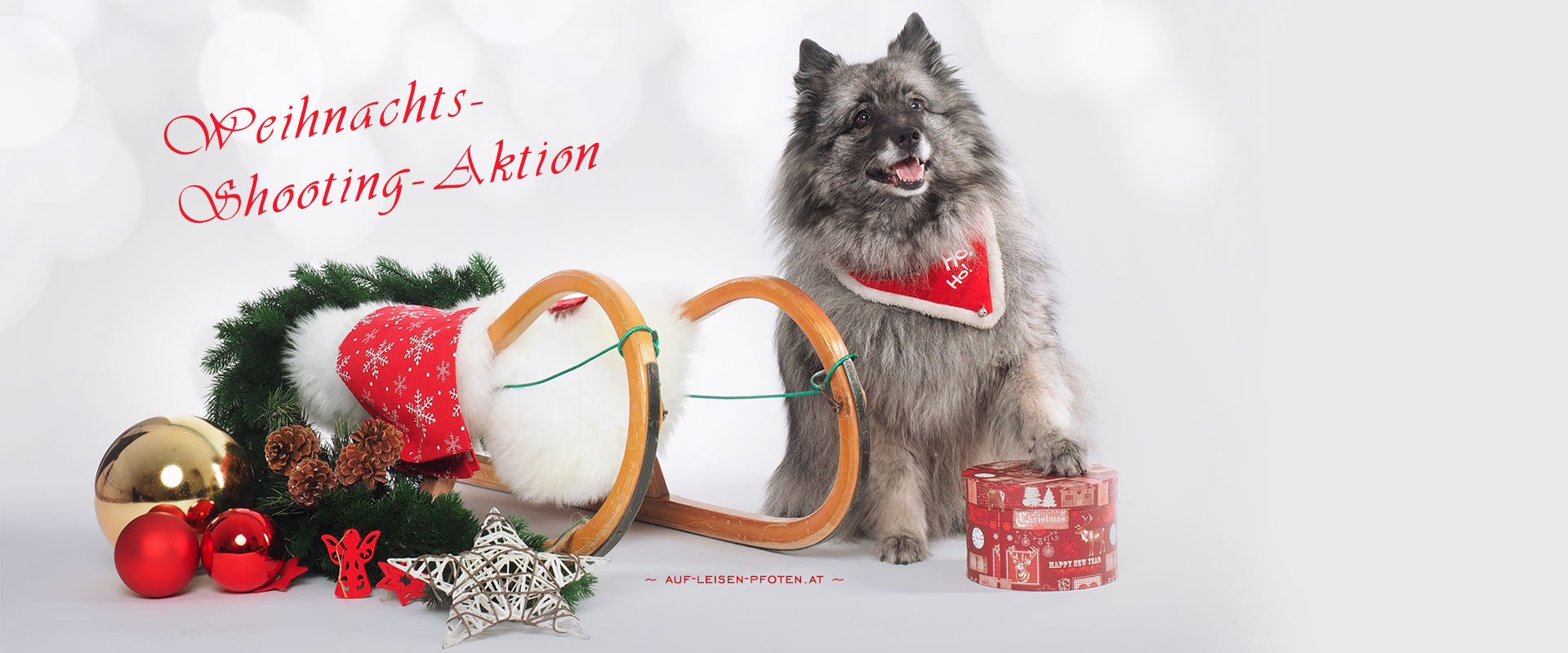 Weihnachtsshooting Aktion 2018